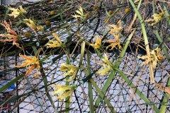 Blomsterinstallation-1.1